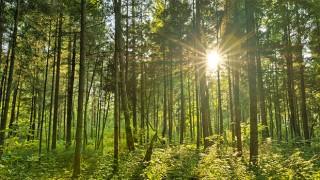 hout_hernieuwbare_grondstof